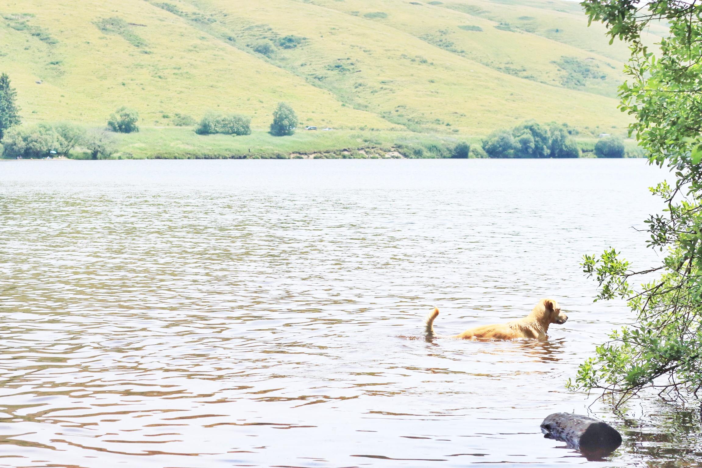 Labrador-lac-guery