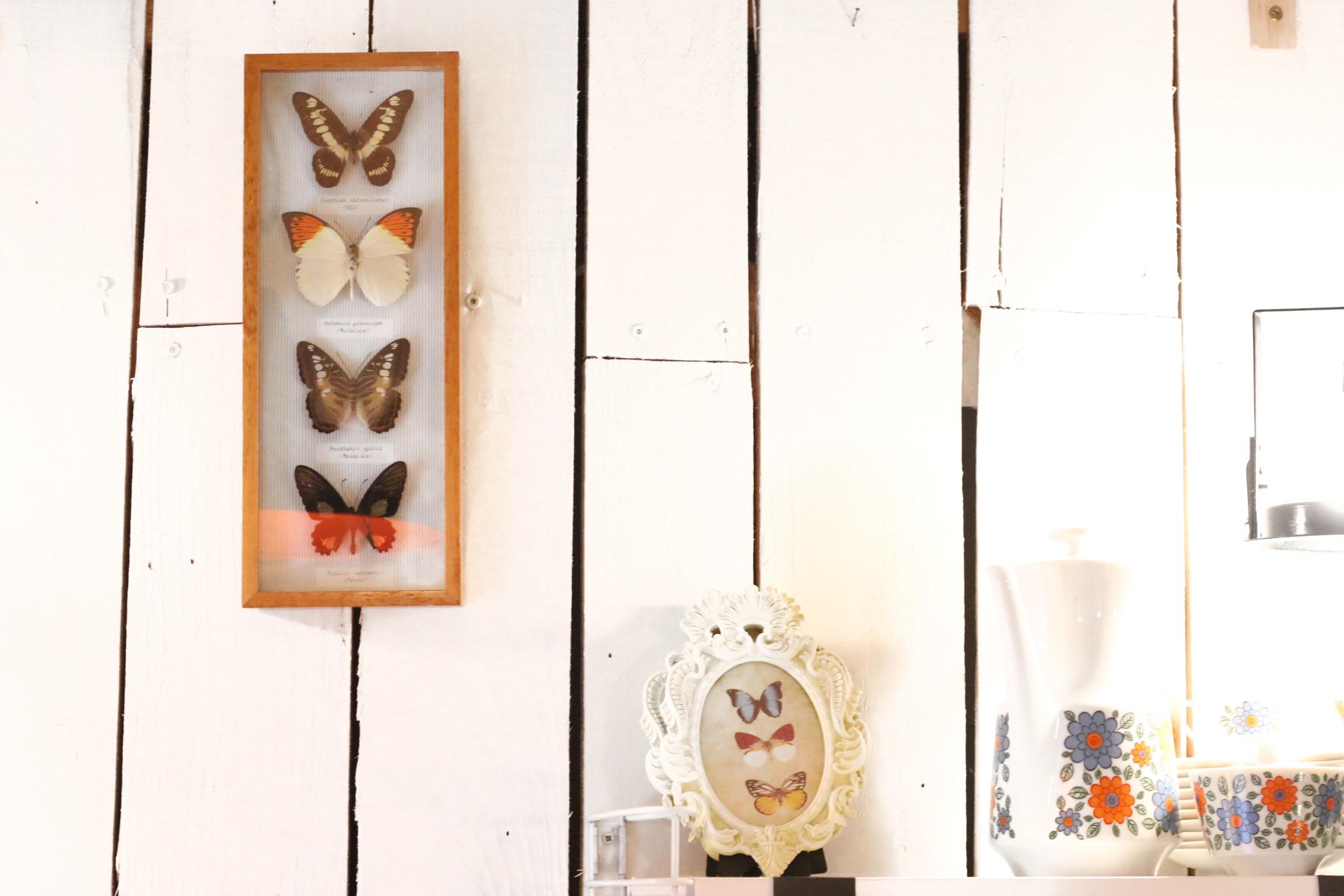 cadre-papillon