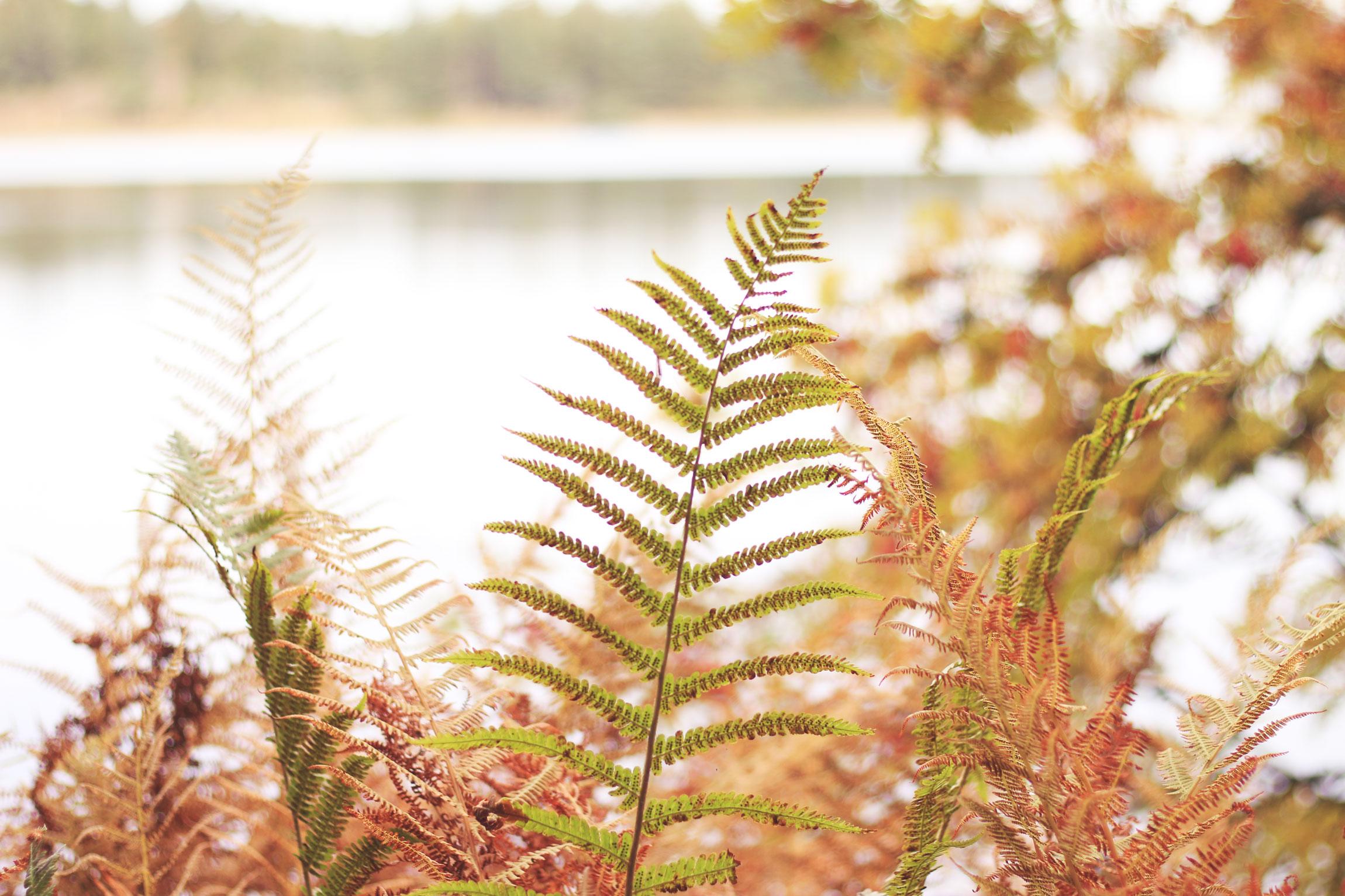 automne-auvergne