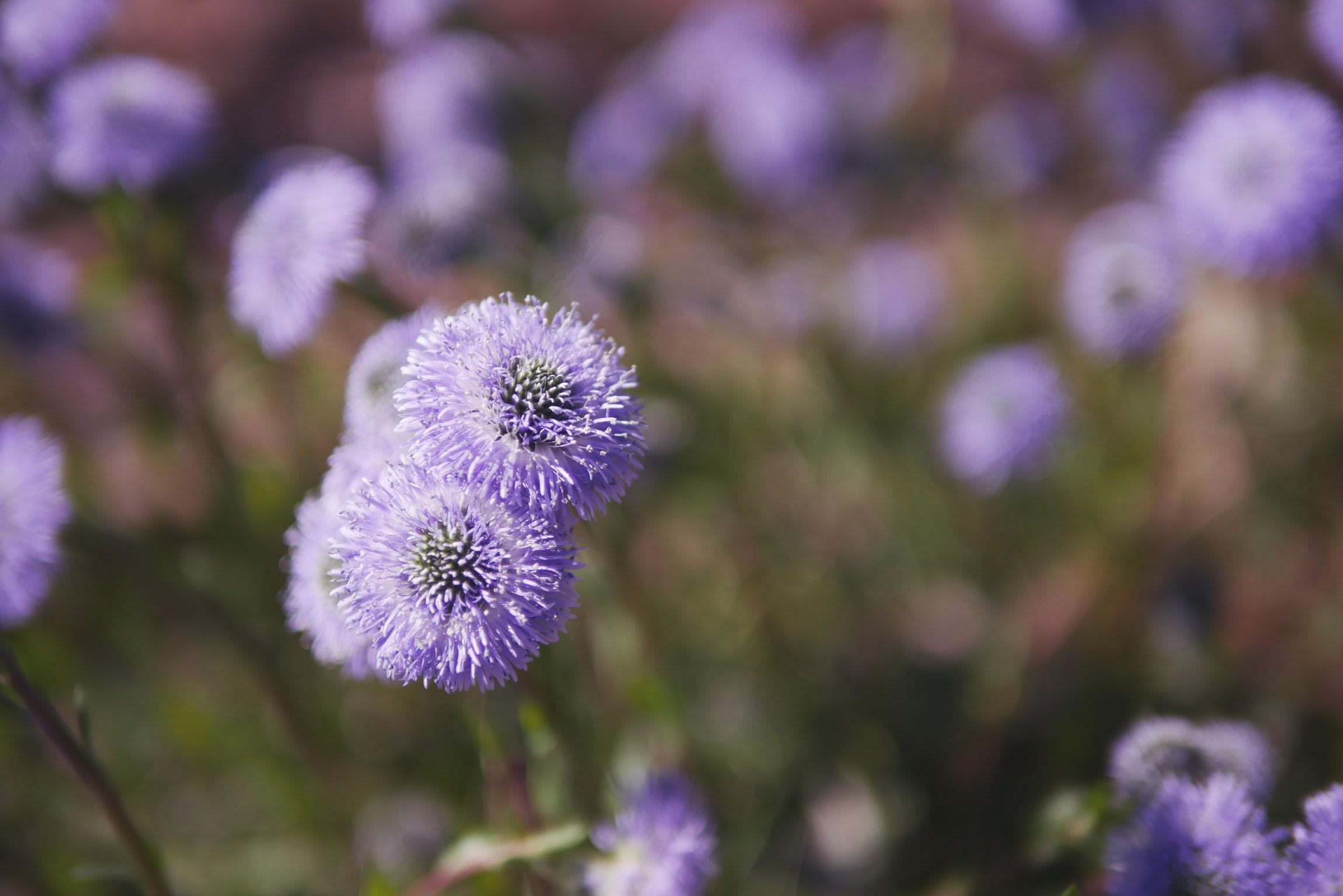fleur-jardin-botanique
