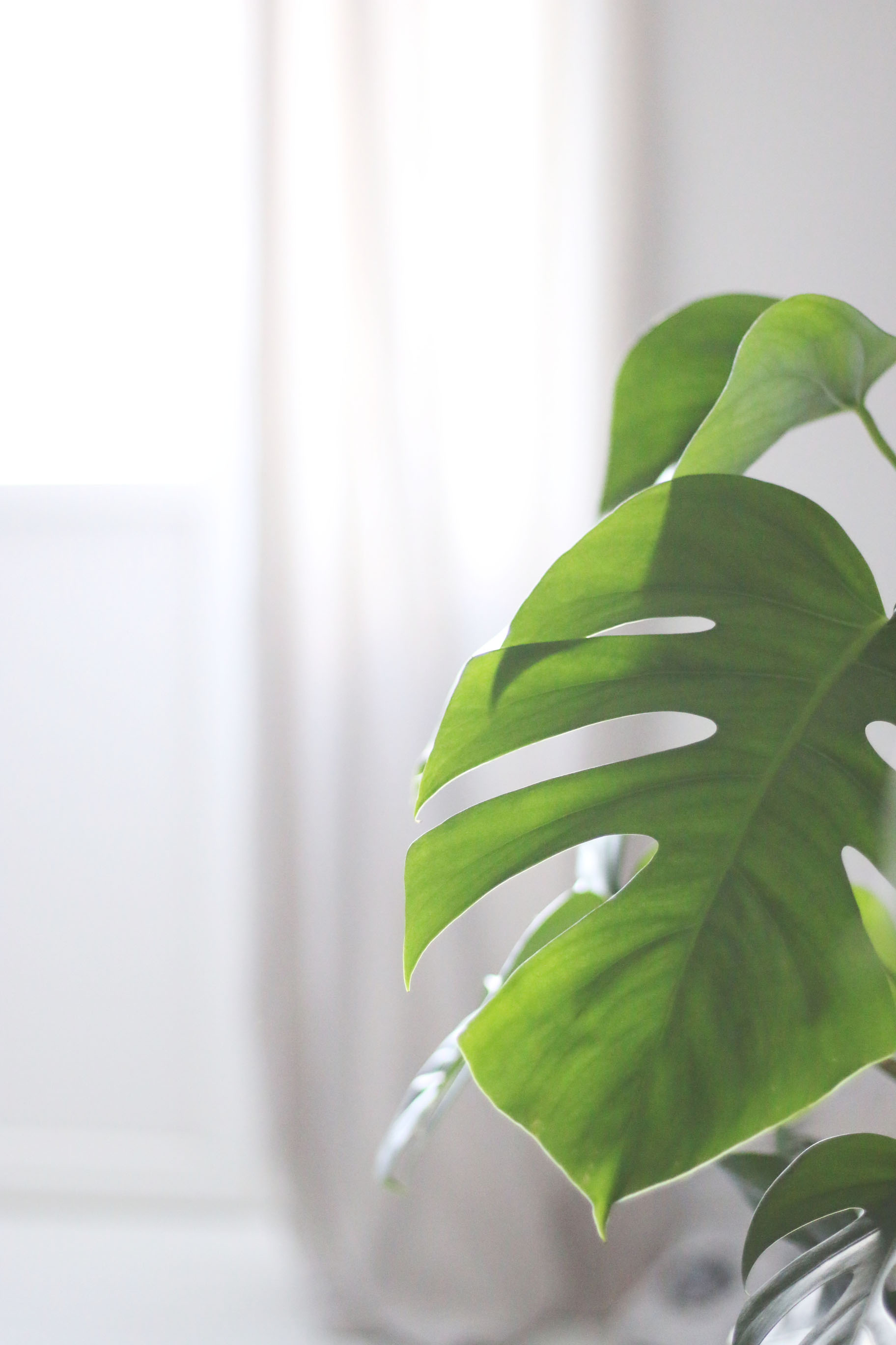 monstera-blog