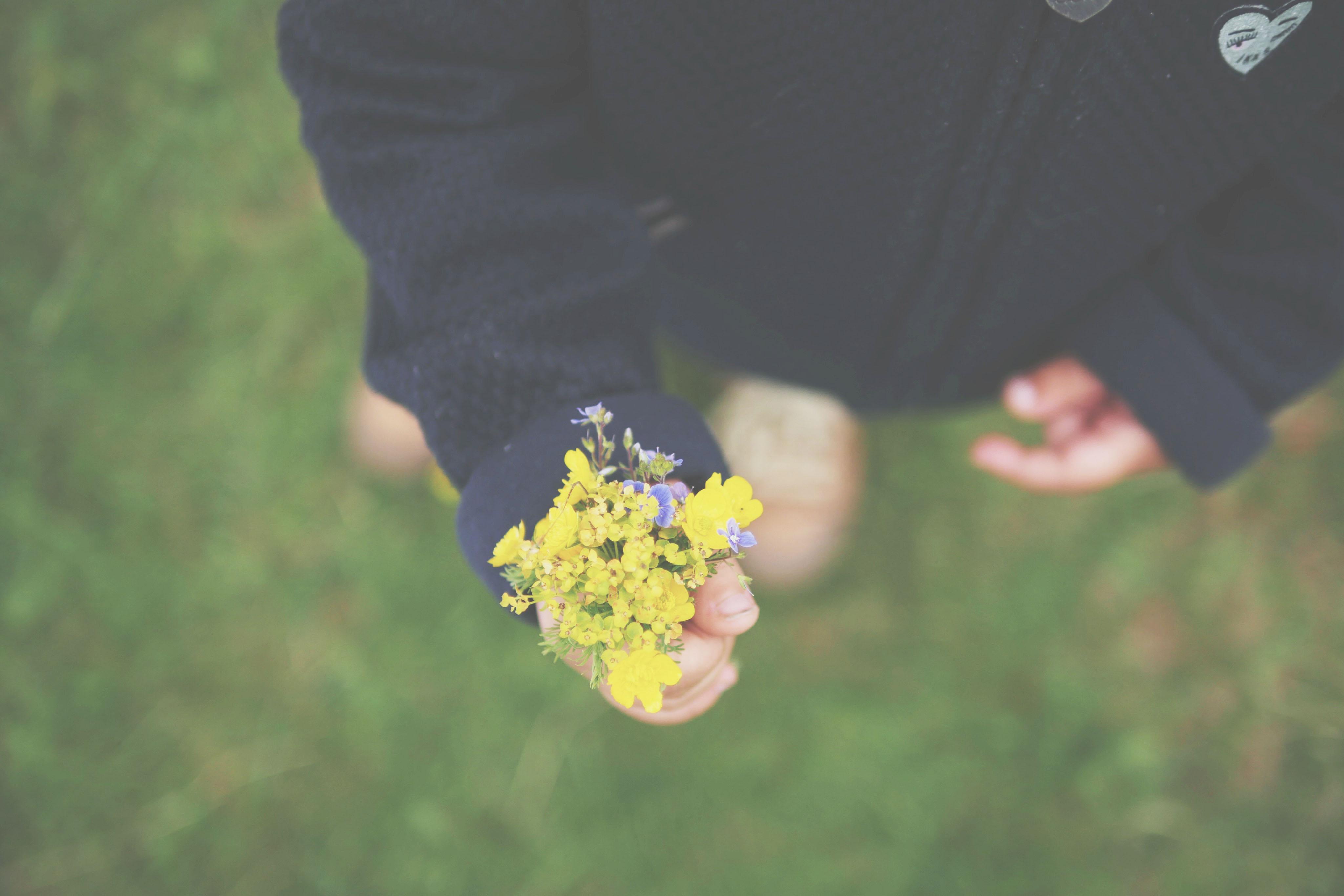 nature-blog-auvergne